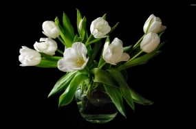 immaculate-white-tulip-bouquet-48694-1920x1200